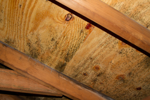 Attic mold remediation